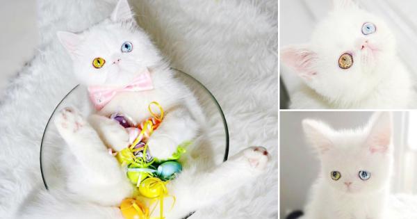 Маче со различна боја на очите е Instagram ѕвезда која ќе